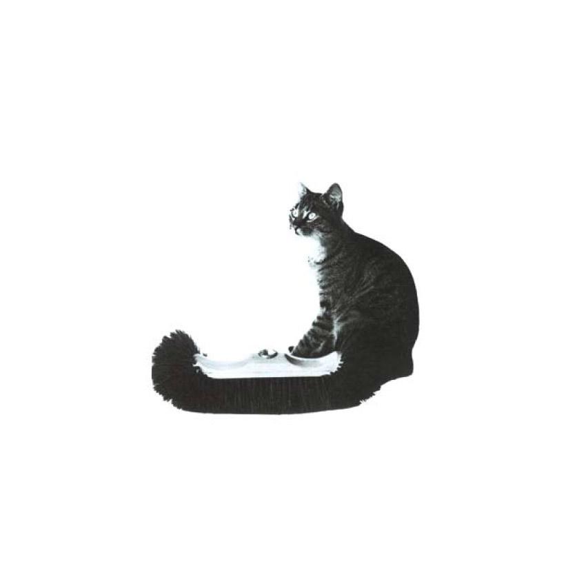 Gatto-soriano